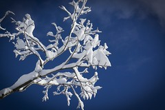 Winter (unnurol) Tags: sky blue snow tree ice cold winter