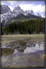 when its spring time in the Canadian rockies (zawaski) Tags: canada beauty alberta naturallight ambientlight noflash canmore calgary rockymountains zawaski©2017 love canonefs18200mmf3556is