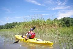 Scared Eagle Islanders II (vastateparksstaff) Tags: park york creek river kayak state kayaking paddling taskinas