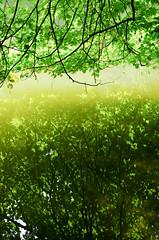 Reflets (Aubin CHALAND) Tags: light sun lake reflection tree nature water soleil eau lumire lac reflet reflect arbre feuille foils