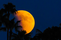 Beginnig Lunar Eclipse (fenicephoto) Tags: