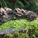 A pile of mushroom