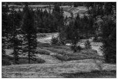 Strade d'acqua (Matteo Bersani) Tags: bw mountain nature natura piemonte montagna biancoenero a58 naturalmente alpeveglia italybw sonyalphaitalia