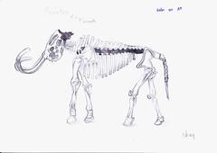 Skeleton.โครงกระดูก อัจจิมา ธีรเลิศนภาพันธ์