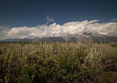 The Tetons from John D Rockefeller Jr. Parkway (2012_yellowstone_1469) (ronnie.savoie) Tags: mountains wyoming 2012 tetonrange grandtetonnationalpark grandtetonyellowstone