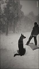 Escena de Nieve. (GARFANKEL) Tags: