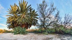 Langford Hot Springs (BongoInc) Tags: bigbendnationalpark chihuahuandesert westtexas cactus desertlandscape