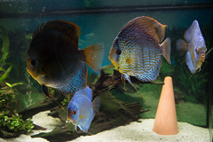 discus breeding area