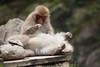 Oh yeah, just there (iorus and bela) Tags: snowmonkeys japan monkey monkeys japanesemonkey yudanaka iorus bela september summer zomervakantie snowmonkeysinthesummer asia travel macaque japanesemacaque wild wildlife