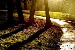 Sundown:DazzlingDay (Tony Tooth) Tags: nikon d7100 tamron 2470mm sunlight dazzling winter afternoon path shadow broughpark leek staffs staffordshire