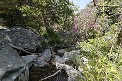 00028_Richtis Gorge
