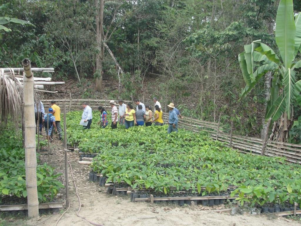 The world 39 s best photos of viveros flickr hive mind for Viveros de plantas