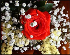 ROSA (Manuisla) Tags: rosasrosa manuisla flores roja ramo cumple irene regalo