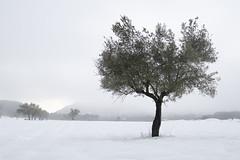 Miradas de nata (Pilonga) Tags: neu hivern silenci fred winter snow solitud mort vida sobrenparaules 20