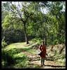 Shortcut through forest (Indianature st2i) Tags: valparai tamilnadu tea teaestate indianature india indiragandhiwildlifesanctuary westernghats anamalaitigerreserve anamalais anamallais anaimallais anamalaiwildlifesanctuary 2016 2017