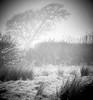 Misty January day (Man with Red Eyes) Tags: soft misty landscape january 150mmhc p45 hasselblad mfd h1 captureone v10 monochrome blackwhite tree silhouette vignette mood mediumformat handheld lancashire northwest
