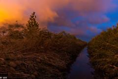 Nubes amarillas (salo75) Tags: agua granangular largaexposicion 1635f4vr nikon d700 nubes baixllobregat luces colores cañas cielo elpratdellobregat atardecer catalunya clouds españa es