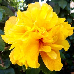 Flower (katherinecontreras) Tags: flower flowers photography gotas yellow beautifull flores nofilter petals nature
