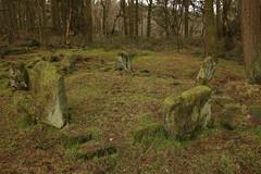 "Doll Tor Stone Circle ""Explored"" (Derbyshire Harrier) Tags: dolltorstonecircle winter 2017 woodland peakdistrict peakpark derbyshire gritstone lichen bronzeage stonecircle birchover standingstones englishheritage explore explored"