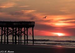 breaking morning (Ronda Hamm) Tags: sillouette sunrise southcarolina pier isleofpalms clouds sun beach ocean boardwalk bird canon7dii color sky 70200mm waves atlanticocean