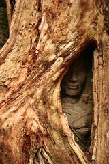 enshrouded (Farl) Tags: travel color tree colors temple cambodia khmer faith religion culture buddhism carving relief exotic monastery jungle tradition root siemreap angkor wat taprohm apsara kampuchea