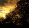 fire in the sky (spaniel shari) Tags: sunset tree silhouette fire fcsetsrises