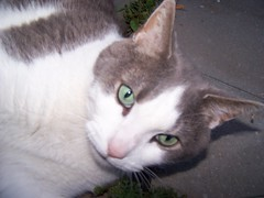 KILLER!!!!!!!!!!!!! (spike55151) Tags: cats cute water tongue cat mouth mammal furry feline fuzzy sweet lick h2o killer kawaii felines tounge mouths charming cuteness sweetness mammals licking fury tongues charmer licks licker catlick mamal tounges mamals fuzzie catlicks catlicker catlickers