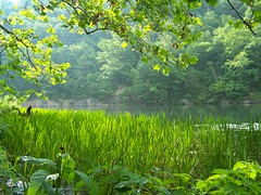 And What Is So Rare As A Day In June? (Ever Upward) Tags: light sun lake green nature water sunshine june spring pond poem missouri ozarks abw