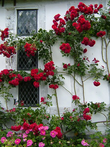 Roses by flash of light on Flickr (click image)