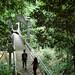 Walking on the Bridge
