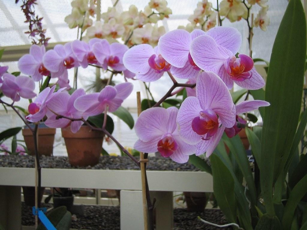 Orchid House Botanic Gardens