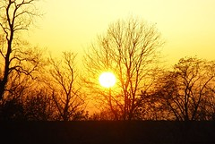 Sunset through an Oak (northmanimages) Tags: trees winter sunset 2 yellow finland gold landscapes helsinki sunscape deleteit saveit2 saveit1 deleteit3 deleteit4 deleteit5 deleteit6 deleteit7 deleteit8 deleteit10 deleteit9 silhouetts