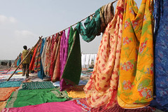 Washerman Spreading Clothes on Line at Yamuna River, Agra India (Captain Suresh Sharma) Tags: india man colors work river spread asia colours patterns hard agra clothes busy dresses labour designs job washing sarees clothline yamuna laborious washerman