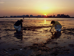 collecting clams in chiba (michenv) Tags: sunset shadow sky sun beach 2004 japan digital asia michelle olympus chiba  nippon digitalcamera orient  camedia   nihon digitalphotos factories digitalphotography olympuscamedia camediaseries   osanpocamera      artificialbeach   olympusdigital theworldthroughmyeyes twtme olympusc50z michenv olympusx2  collectingclams  michenv2004