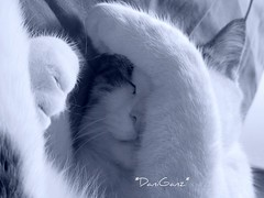 Sleeping Fusillo (*DaniGanz*) Tags: blue sleeping white cute cat interestingness interesting sweet blu tabby cyan kitty explore mostinteresting paws gatto kittie micio zampe addormentato top20cats fusillo daniganz flickrsexplore interestingcat ggg01 bestofcats boc1106 cmcnov07 smi001