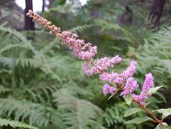 Wildflower (irish blue eyes) Tags: camp mountain driftwoodpa masonhill
