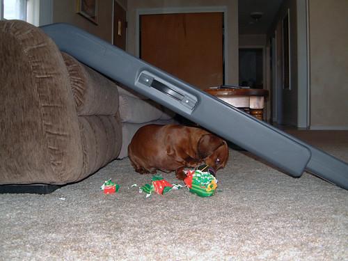 2005-12-25 - DoggieXMas-0004