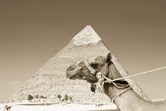 A Camel in front of the Keops' pyramid (Merkur*) Tags: from colour classic love beautiful museum sepia neck that this la is photo nice fantastic perfect thought shot angle pyramid very you know being or great group egypt like photographers games it symmetry line well loveit have example cest cairo camel frame blogging kosova kosovo disabled if works pyramids form choice didnt dust done tomorrow would seen camels anyway later vie pharao youd pharaonic the featured gizah kefren beqiri kosovar kosovan beeen shot independenceforkosovo hasnoalternative