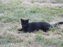 PICT0183 (wickenpedia) Tags: archaeology cat mog timeteam wicken wwwwickenarchaeologyorguk leocassandramcneir