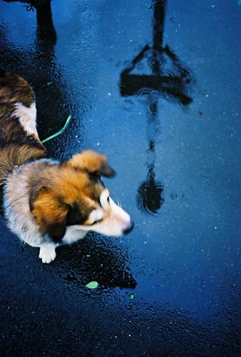 Puppy on the rainy road