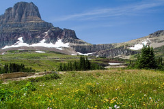 Wildflower Meadow (Robby Edwards) Tags: vacation mountains tag3 taggedout nationalpark montana tag2 tag1 meadow hike glacier trail alpine wildflowers glaciernationalpark hiddenlake loganpass payitforward goingtothesunroad abigfave