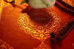 Quran (mehmetakifguler) Tags: rose islam gül kerim quran İslam tesbih kuranı