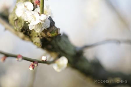 Soga Bairin Plum Orchard