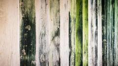 Algae Textured Wall (sav.here) Tags: green texture wall canon eos algae 760d