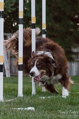 August 26, 2016 - Thornton resident, Scout, enjoys National Dog Day. (Tony's Takes)