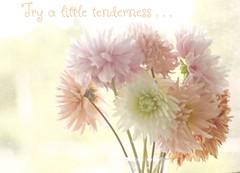 "Try a little tenderness . . . ""love is patient, love is kind"" (Shutterbuglette) Tags: flowers inspiration floral garden poster soft pretty pastel highkey blooms gardenflowers cutflowers pastelcolours vaseofflowers tryalittletenderness copyrightedimage loveispatientloveiskind dahliablossoms shutterbuglette"