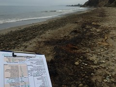 SBRASS survey sheet oiled beach Summerland 08-22-15