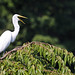 So, an egret glides into a bar, and the bartender says...