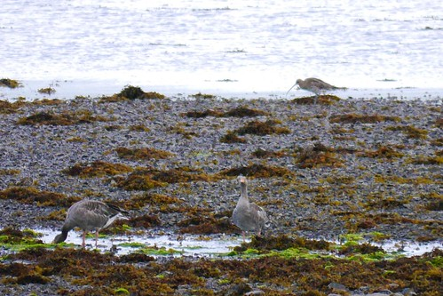 03 Sept 2015 Isle of Mull (164)