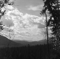 Untitled (Sketches_on_Film) Tags: camera tree 120 film nature photography photo kodak hc110 plus hp5 ilford